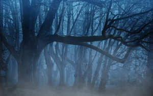forest-3394066_1920